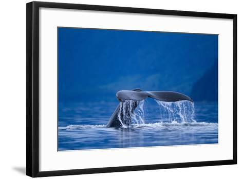 Humpback Whale, Alaska--Framed Art Print