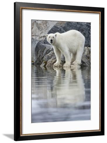Polar Bear, Svalbard, Norway--Framed Art Print