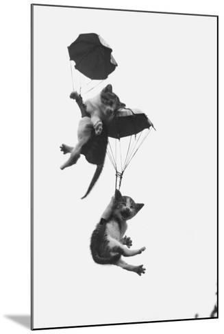 Parachuting Kittens--Mounted Photographic Print