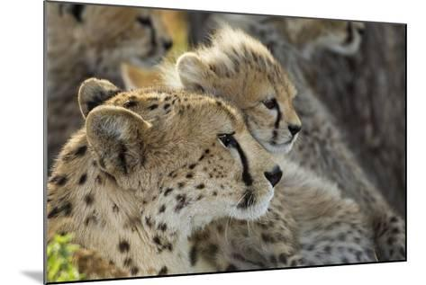 Cheetah Cub and Mother-Paul Souders-Mounted Photographic Print