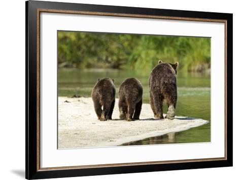 Brown Bear and Cubs, Katmai National Park, Alaska--Framed Art Print