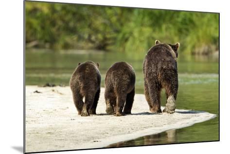 Brown Bear and Cubs, Katmai National Park, Alaska--Mounted Photographic Print