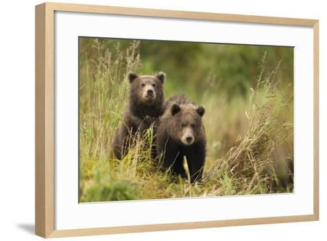 Brown Bear Cubs, Katmai National Park, Alaska--Framed Art Print