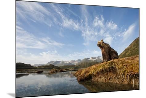 Brown Bear and Mountains, Katmai National Park, Alaska--Mounted Photographic Print