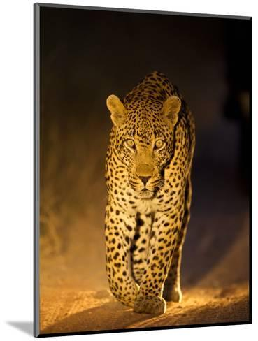 Leopard at Night, Sabi Sabi Reserve, South Africa--Mounted Photographic Print