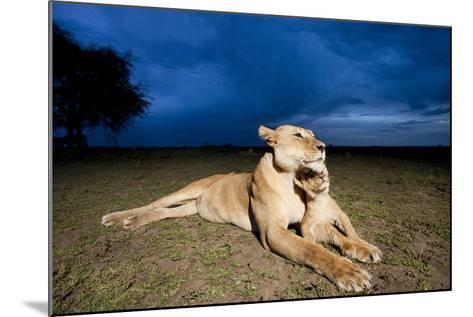 Lioness and Cub--Mounted Photographic Print