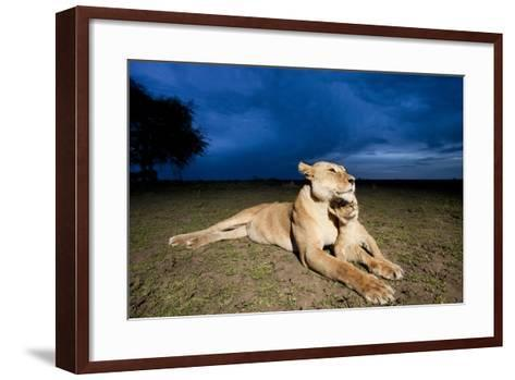 Lioness and Cub--Framed Art Print