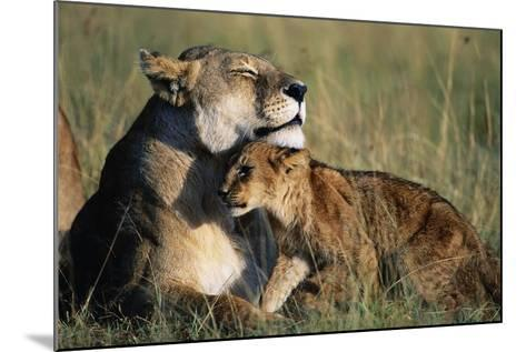 Lioness and Cub Resting on the Savanna--Mounted Photographic Print