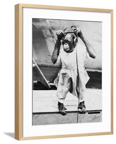 Orangutan Listens to Headphones--Framed Art Print
