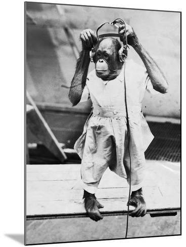Orangutan Listens to Headphones--Mounted Photographic Print