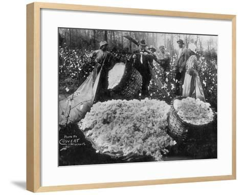 Manager Weighing Picked Cotton--Framed Art Print