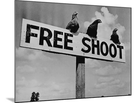 """Grouse on """"Free Shoot"""" Sign--Mounted Photographic Print"""