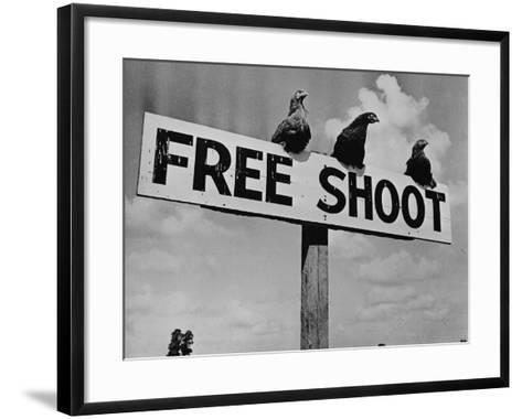 """Grouse on """"Free Shoot"""" Sign--Framed Art Print"""