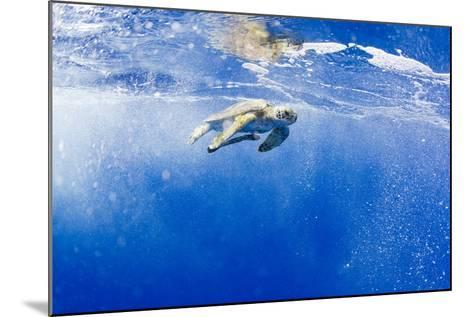 Underwater View of Green Sea Turtle in Hawaii-Paul Souders-Mounted Photographic Print