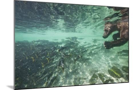 Underwater Brown Bear, Katmai National Park, Alaska-Paul Souders-Mounted Photographic Print