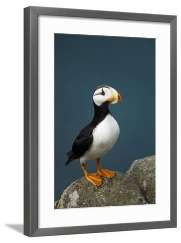 Puffin, Katmai National Park, Alaska-Paul Souders-Framed Art Print
