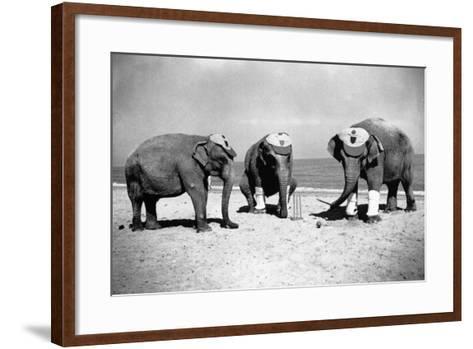 Elephants Play Beach Cricket--Framed Art Print