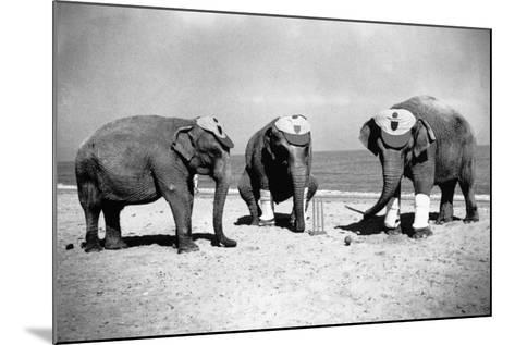 Elephants Play Beach Cricket--Mounted Photographic Print