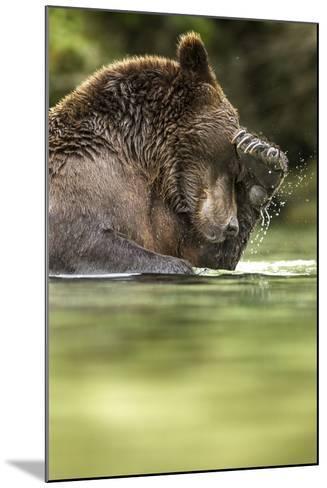Brown Bear, Katmai National Park, Alaska--Mounted Photographic Print
