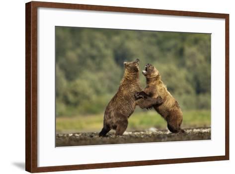 Grizzly Bear, Katmai National Park, Alaska-Paul Souders-Framed Art Print