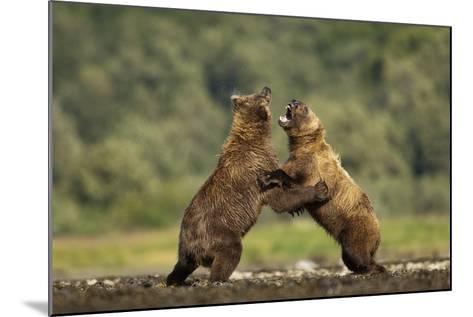 Grizzly Bear, Katmai National Park, Alaska-Paul Souders-Mounted Photographic Print