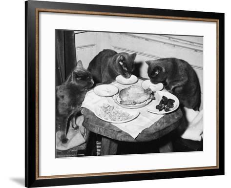 Cats' Celebratory Feast--Framed Art Print