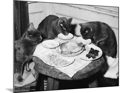 Cats' Celebratory Feast--Mounted Photographic Print