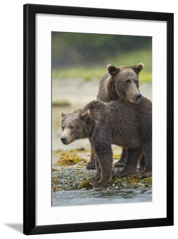 Brown Bear and Cub, Katmai National Park, Alaska-Paul Souders-Framed Art Print