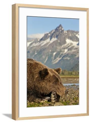 Brown Bear and Coastal Mountains, Katmai National Park, Alaska-Paul Souders-Framed Art Print