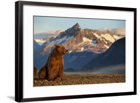 Brown Bear at Dawn, Katmai National Park, Alaska-Paul Souders-Framed Art Print