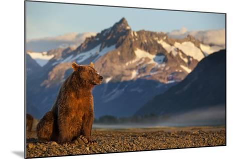 Brown Bear at Dawn, Katmai National Park, Alaska-Paul Souders-Mounted Photographic Print