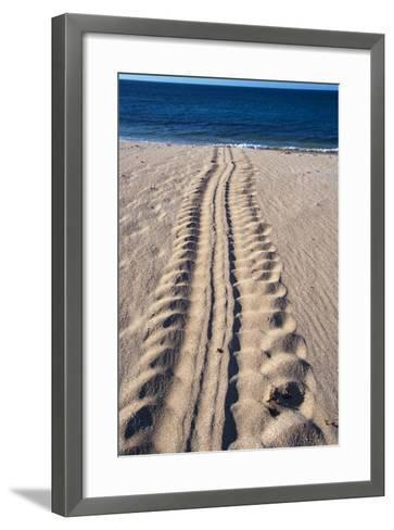 Giant Turtle Tracks in the Sand-Paul Souders-Framed Art Print