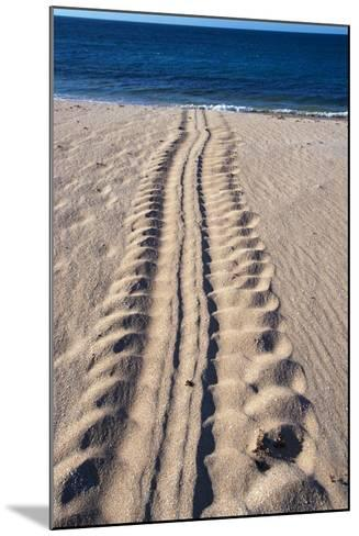 Giant Turtle Tracks in the Sand-Paul Souders-Mounted Photographic Print