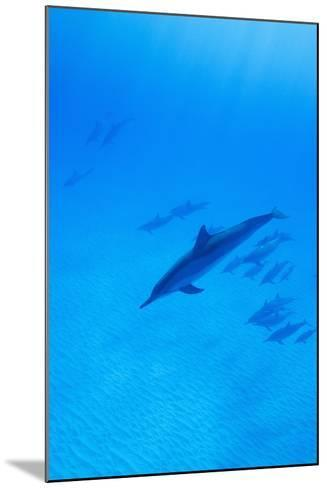 Spinner Dolphins Underwater-Paul Souders-Mounted Photographic Print