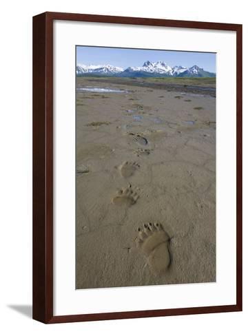 Brown Bear Tracks at Hallo Bay in Katmai National Park-Paul Souders-Framed Art Print
