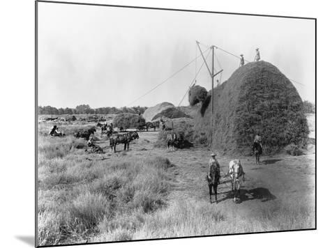 Alfalfa Haystack-C.E. Watkins-Mounted Photographic Print