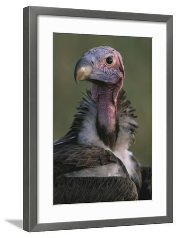 Close-Up of Lappet-Faced Vulture-Paul Souders-Framed Art Print