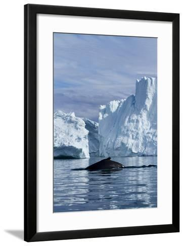 Humpback Whale in Disko Bay in Greenland-Paul Souders-Framed Art Print