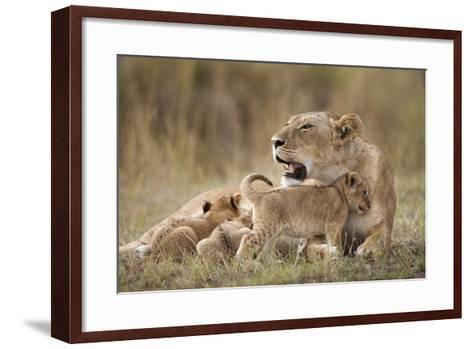 Lioness Nursing Cubs in Masai Mara National Reserve-Paul Souders-Framed Art Print