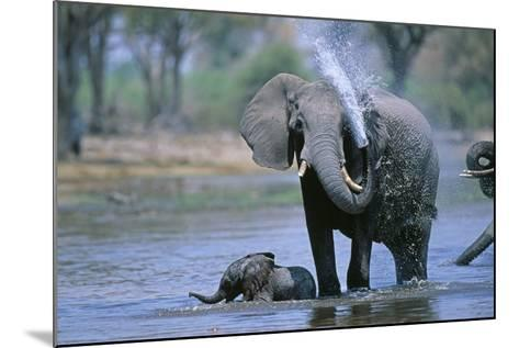 Elephant and Calf Cooling Off in River-Paul Souders-Mounted Photographic Print