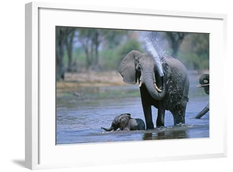 Elephant and Calf Cooling Off in River-Paul Souders-Framed Art Print