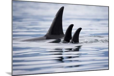 Pod of Orca Whales in Stephens Passage-Paul Souders-Mounted Photographic Print