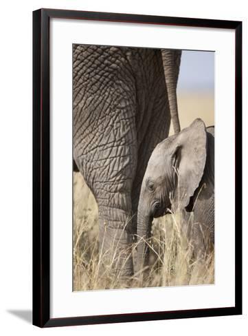 Elephant Calf Beside Adult in Masai Mara National Reserve-Paul Souders-Framed Art Print