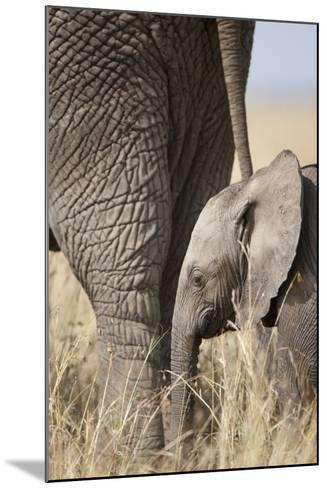 Elephant Calf Beside Adult in Masai Mara National Reserve-Paul Souders-Mounted Photographic Print