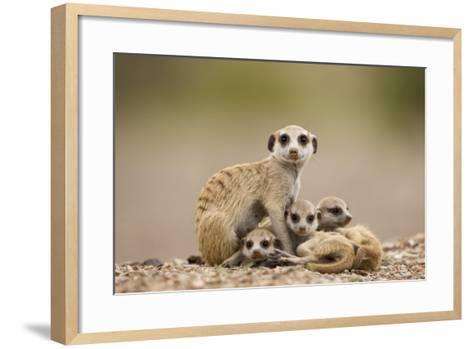 Meerkat with Pups-Paul Souders-Framed Art Print