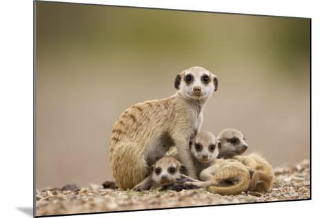Meerkat with Pups-Paul Souders-Mounted Photographic Print
