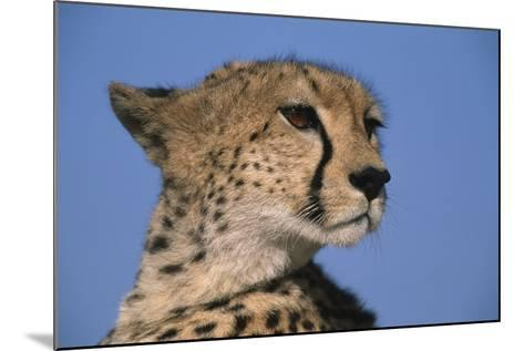 Close-Up of Cheetah-Paul Souders-Mounted Photographic Print