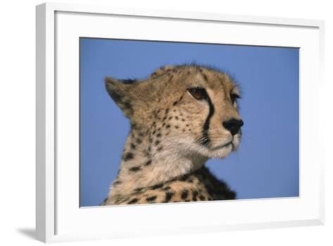 Close-Up of Cheetah-Paul Souders-Framed Art Print