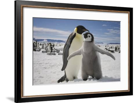 Emperor Penguin and Chick in Antarctica-Paul Souders-Framed Art Print