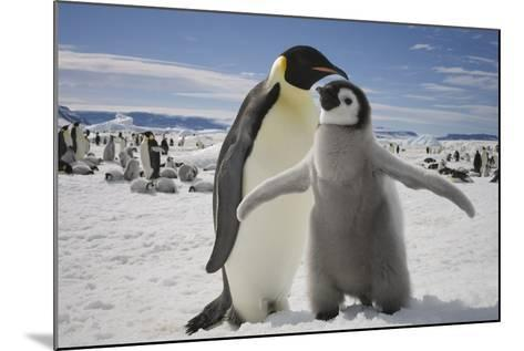 Emperor Penguin and Chick in Antarctica-Paul Souders-Mounted Photographic Print